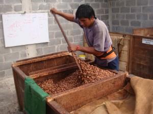 Casse di fermentazione con rimescolamento delle fave.