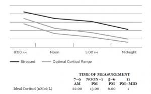 Andamento del cortisolo nelle 24h durante la prima fase di stress