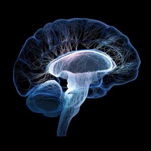 Alimentazione in equilibrio - Cervello