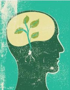 Alimentazione in equilibrio - Cervello2