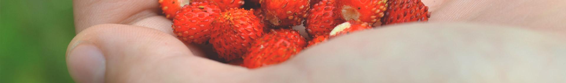 header_curiosita-cibo